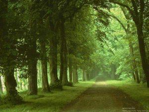 Caminho Monoteísmo Noaico